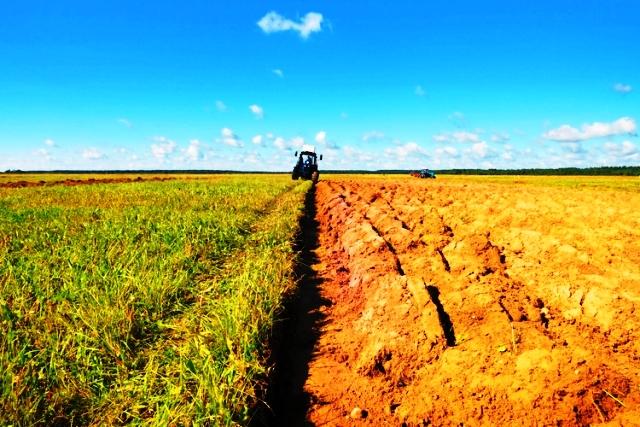 Campo_agricolo
